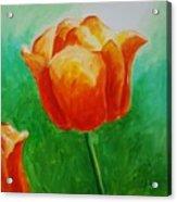 A Tulip For Jolee Acrylic Print