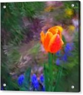 A Tulip Stands Alone Acrylic Print