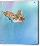 A Turtles Flight Acrylic Print