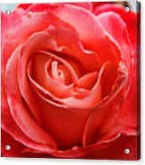 A Unique Rose Just For You Acrylic Print