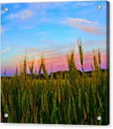 A View From Crop Level Acrylic Print