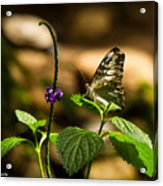 A  View Of A Butterfly Acrylic Print