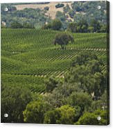A Vineyard In The Anderson Valley Acrylic Print