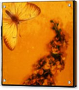A Vintage Flower Butterfly Acrylic Print