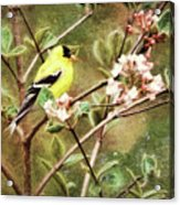 A Vision Of Spring Acrylic Print