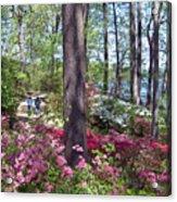 A Walk Among The Azaleas Acrylic Print
