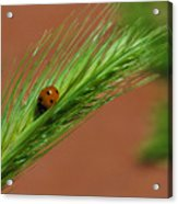 A Walk In The Tall Grass Acrylic Print
