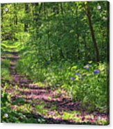 A Walk Through The Bluebells Acrylic Print