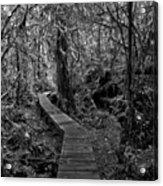 A Walk Through The Willowbrae Rainforest Black And White Acrylic Print