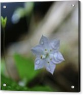 A Washed Flower Acrylic Print