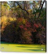 A Wetland Display Acrylic Print