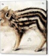 A Wild Boar Piglet Acrylic Print