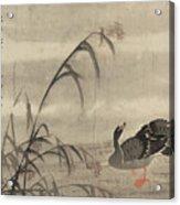 A Wild Goose Acrylic Print