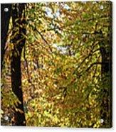 A Window To Fall Acrylic Print