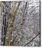 A Winter Day Acrylic Print