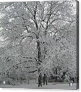 A Winter Touch Acrylic Print