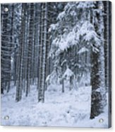 A Winter View Of The Acrylic Print by Taylor S. Kennedy
