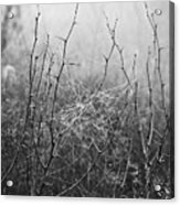 A Winter Web Acrylic Print