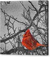 A Winter Wonder Acrylic Print
