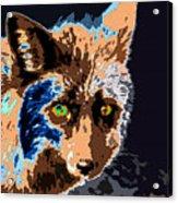 A Wolf Staring Acrylic Print