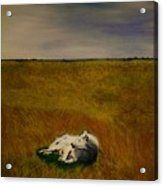 A Wolf Story Acrylic Print