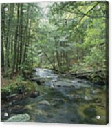 A Woodland View With A Rushing Brook Acrylic Print