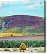 A Yamhill Co. Vineyard Acrylic Print by Margaret Hood