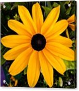 A Yellow Beauty Acrylic Print