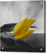 A Yellow Flower Acrylic Print