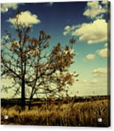 A Yellow Tree In A Middle Of A Dry Field - Wide Angle Acrylic Print