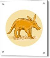 Aardvark African Ant Bear Drawing Acrylic Print