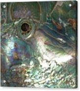 Abalone Acrylic Print
