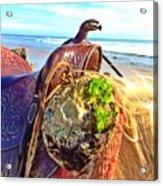 Abalone On Saddle Acrylic Print