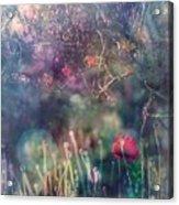 Abandoned Garden II Acrylic Print