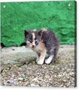 Abandoned Kitten On The Street Acrylic Print