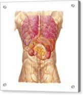 Abdominal Quadrants With Internal Acrylic Print