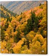 Ablaze With Autumn Glory Acrylic Print