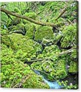 Above Moine Creek Acrylic Print