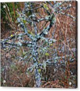 Abstract And Lichen Acrylic Print