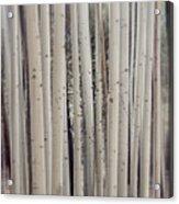 Abstract Aspen Tree Trunks Acrylic Print