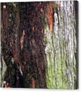 Abstract Bark 15 Acrylic Print