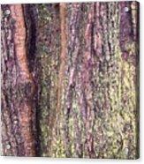 Abstract Bark 3 Acrylic Print