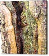 Abstract Bark Acrylic Print