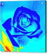 Single Blue Rose Abstract Acrylic Print