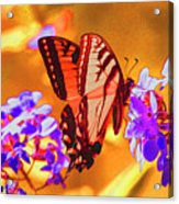 Abstract Butterfly Acrylic Print