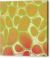 Abstract Cells 2 Acrylic Print