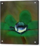 Abstract Clover Acrylic Print