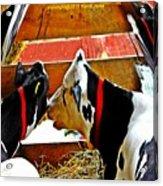 Abstract Cows Acrylic Print