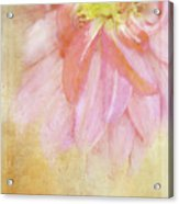 Abstract Dahlia In Pink Acrylic Print