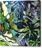 Abstract Dandelion Acrylic Print